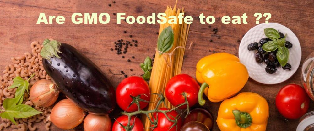 Are GMO Food Safe to Eat